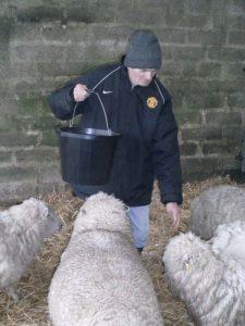 Regard service user, Ivan Keast, with Ryeland Sheep