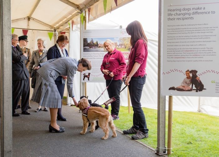 HRH meeting hearing demonstration dog, Brock
